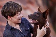 Blue Dog Cinema Australia Featured